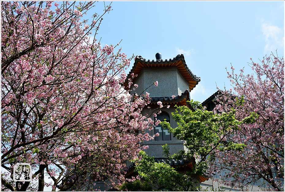 東方寺櫻花8.jpg