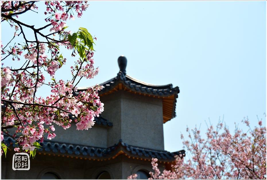 東方寺櫻花12.jpg