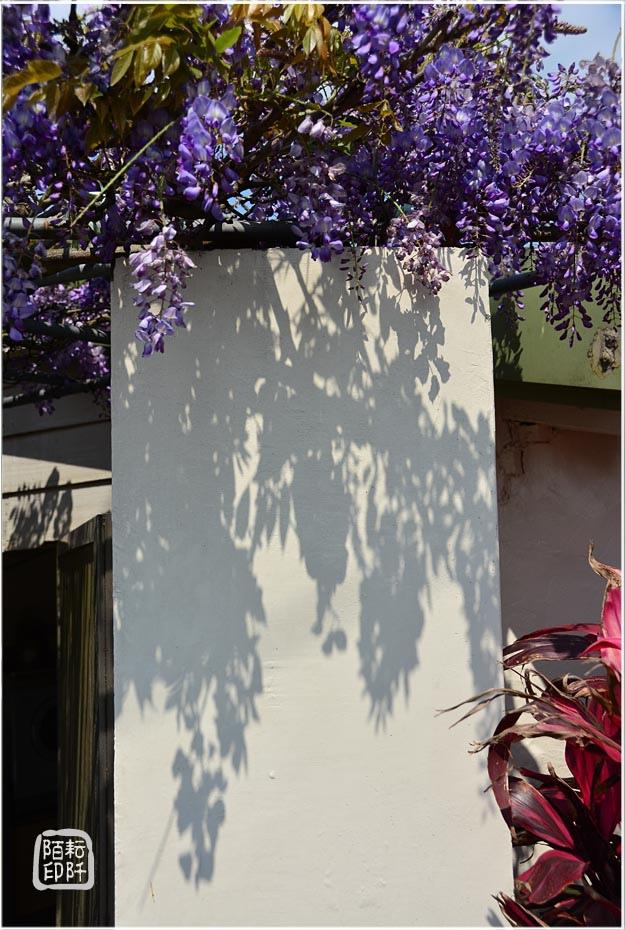 紫藤魔力6.jpg