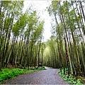 竹林之美1.jpg