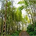 竹林之美2.jpg