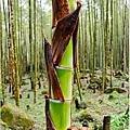 竹林之美3.jpg