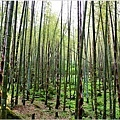 竹林之美4.jpg
