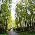 竹林之美8.jpg