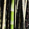 竹林之美10.jpg