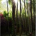 竹林之美12.jpg