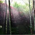 竹林之美11.jpg