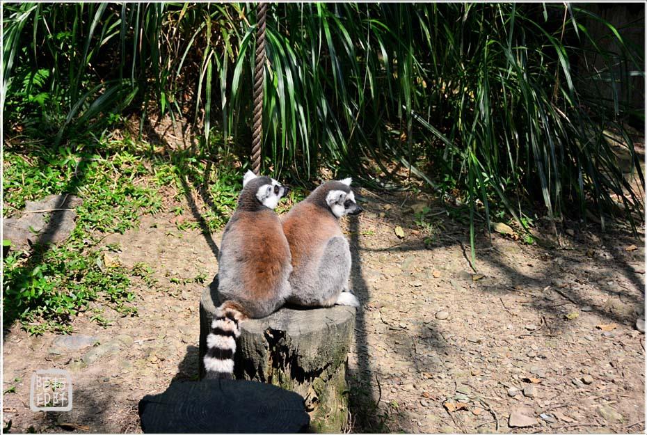 2014動物園7.jpg