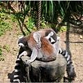 2014動物園8.jpg