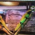 動物園的反思5.jpg