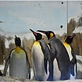 動物園的反思6.jpg