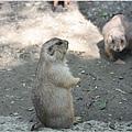 動物園的反思7.jpg