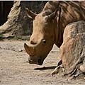木柵動物園2.jpg