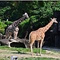 木柵動物園7.jpg