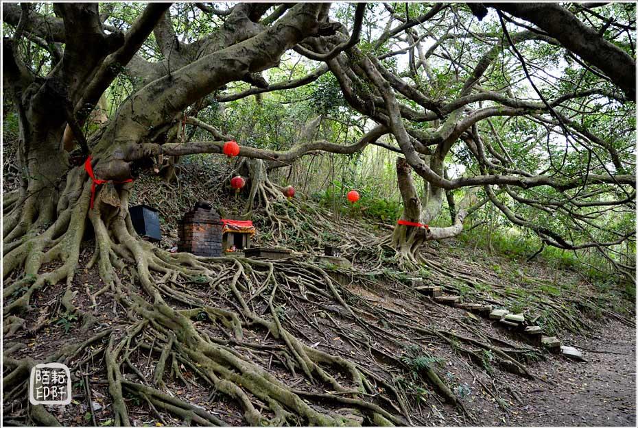 古榕樹下1.jpg