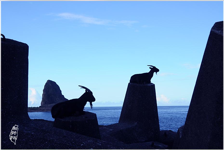 蘭嶼的山羊1.jpg