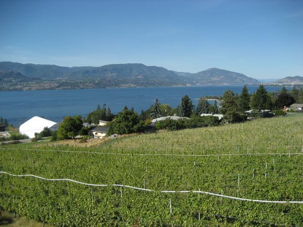 酒庄旁的葡萄園