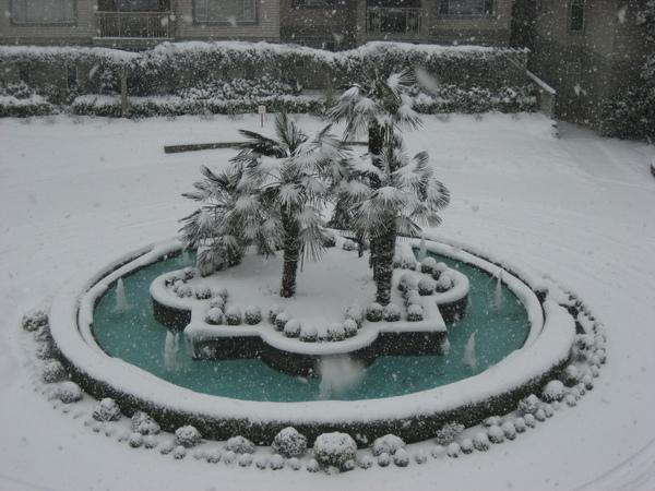 積雪的噴水池