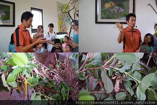 甲蟲森林-竹節蟲.jpg