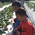 21草莓園.jpg