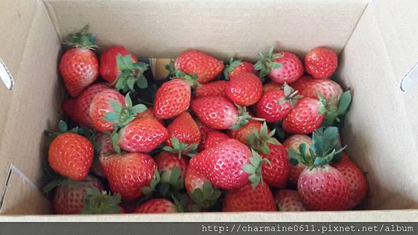 25草莓園.jpg
