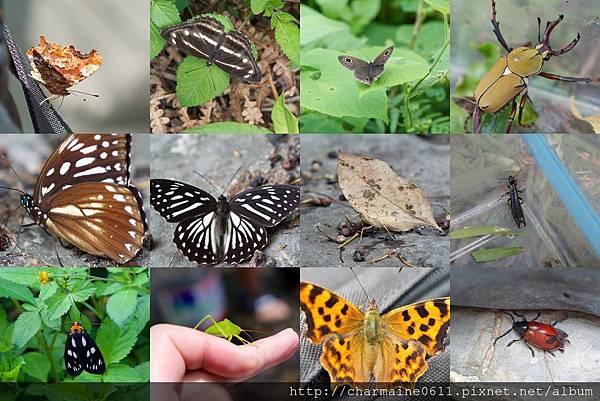大自然的生命