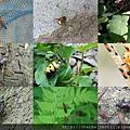 甲蟲世界.jpg