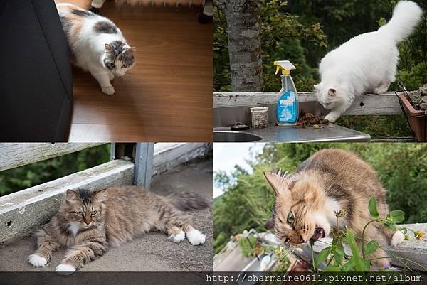 老闆的貓.jpg