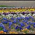 nEO_IMG_DSC01602.jpg