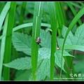 nEO_IMG_DSC01992.jpg