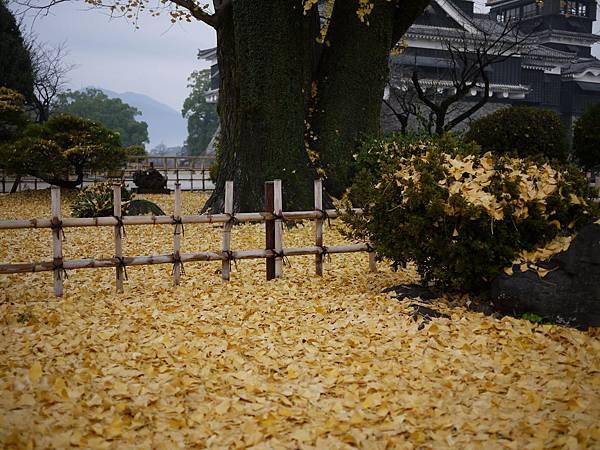 20091210熊本城400年銀杏落葉.JPG