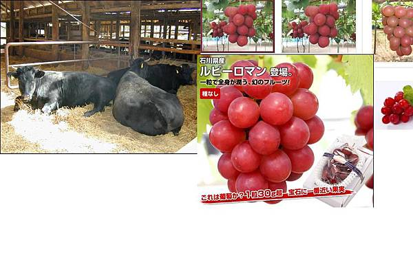 葉山牛vs ruby roman
