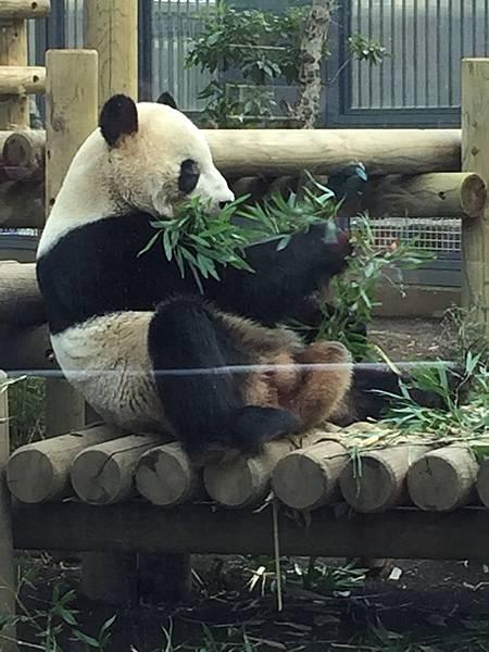 上野動物園 013