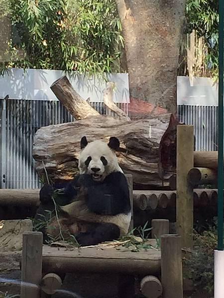 上野動物園 022