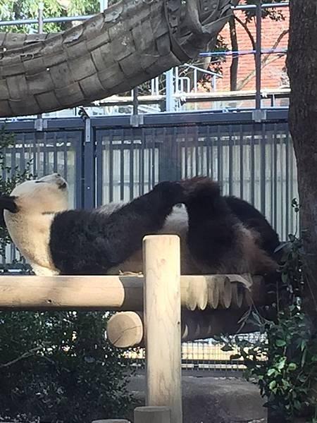 上野動物園 028