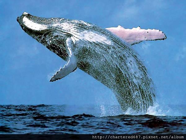 賞鯨行程加入1