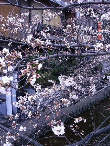 京都 木屋町和五条口 3.
