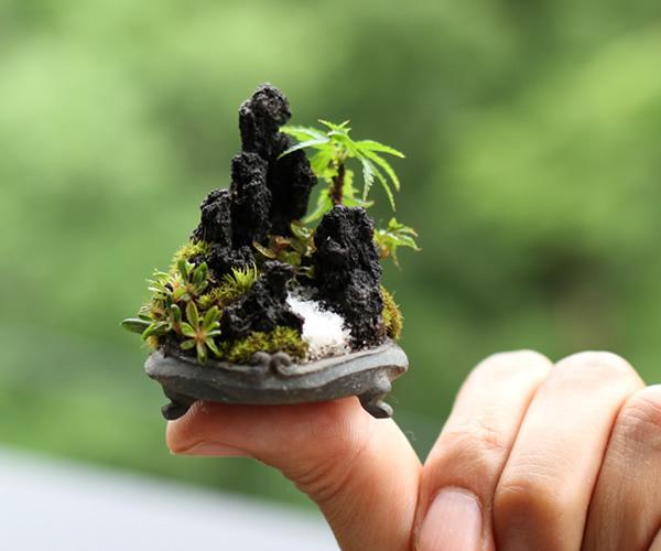 kokezaru2016-bonsai3.jpg