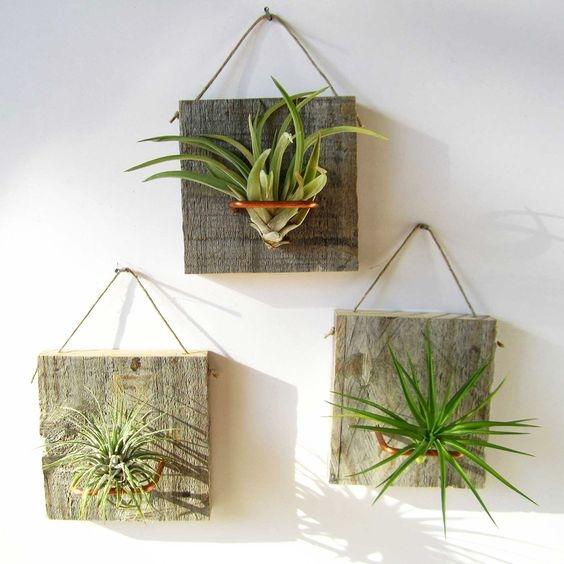 plants+++.jpg