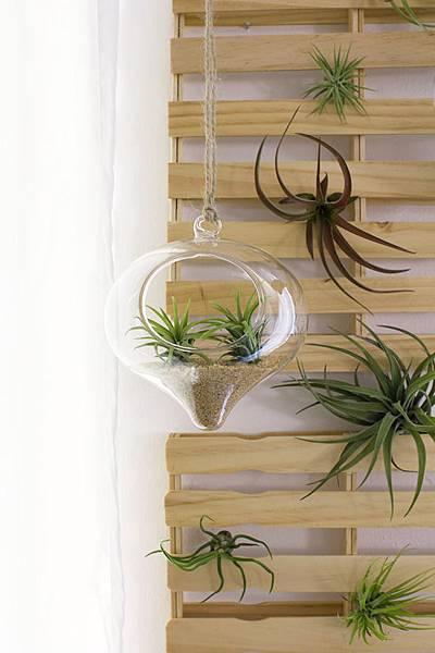 hanging-terrarium1.jpg