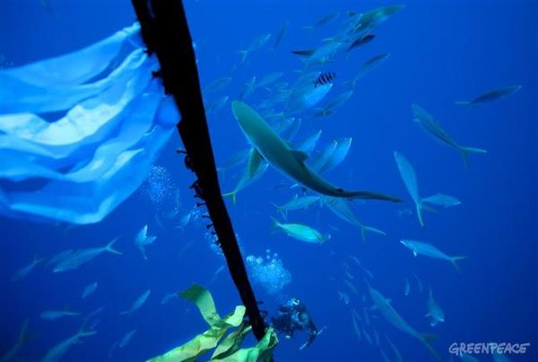 fish-near-fad圍繞人工集魚器的魚群.jpg