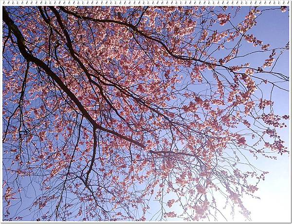foto1696.jpg