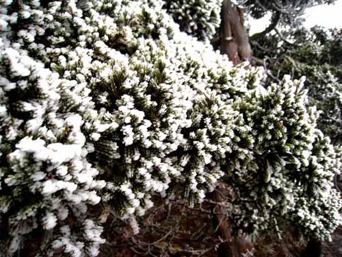 白色的花 冬季限定