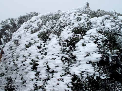 今天的雪不是下下來的 是長出來的