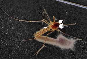蚊子拷貝.jpg
