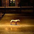 忠犬11.jpg