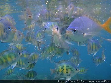 【Day3】浮潛點6:美人魚水道
