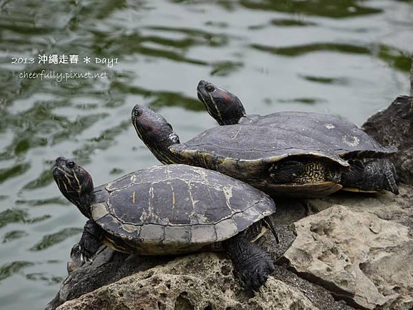 沖繩走春_DAY1 (33).JPG