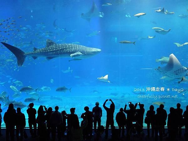 沖繩走春_DAY2 (66).JPG