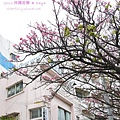 沖繩走春_DAY4 (2).JPG